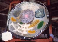 拡大細胞模型レプリカ