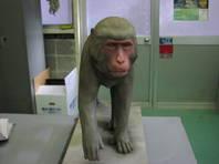 実物大動物模型